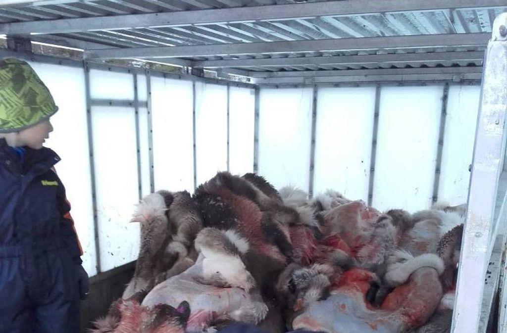 Darf man Kindern solche grausigen Bilder von geschlachteten Tieren zeigen –  geschweige denn sie bei der Arbeit mithelfen lassen? Foto: