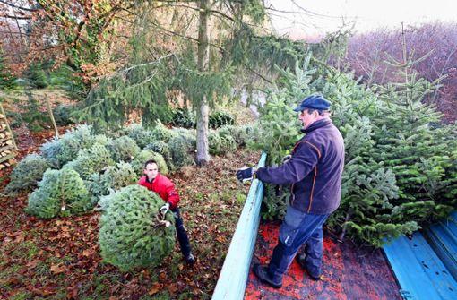 Wo der Weihnachtsbaum ökologisch und sozial ist