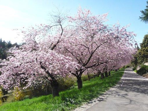 Ein Frühlingstag in Leonberg