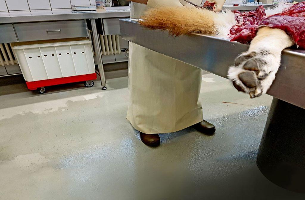 Obduktion eines Hundes im  Veterinäruntersuchungsamt Foto: Nadine Zeller