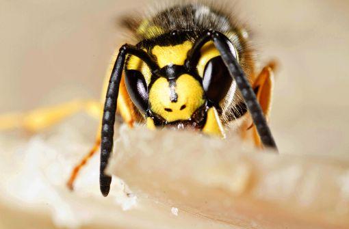Wespe löst schlimmen Unfall mit zwei Schwerverletzten aus