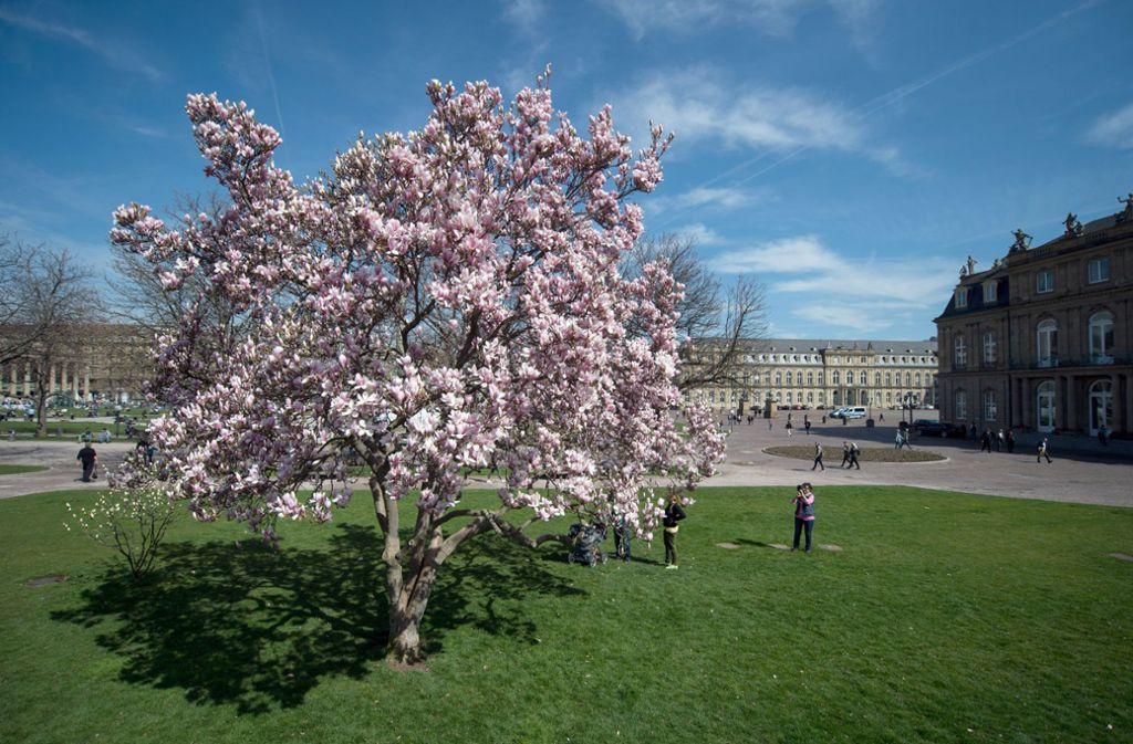Der Frühling war 2020 überdurchschnittlich warm und zu trocken. Foto: dpa/Marijan Murat