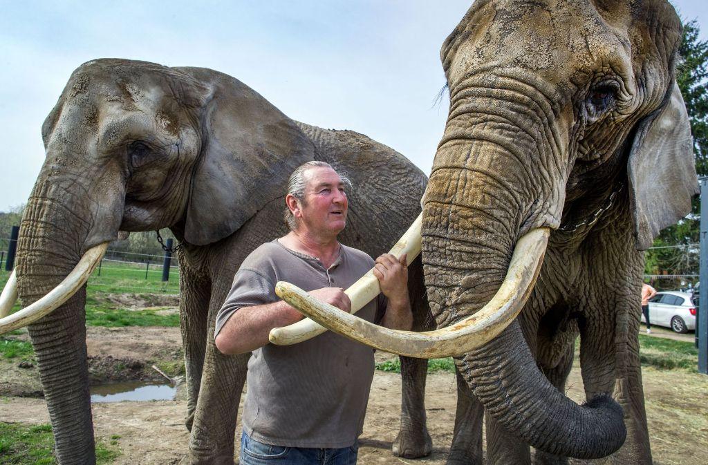 Auf dem Elefantenhof in Platschow trainiert der international bekannte Dompteur Sonni Frankello seine Dickhäuter für zukünftige Zirkusauftritte. Besucher können ihm dabei über die Schulter schauen. Foto: dpa