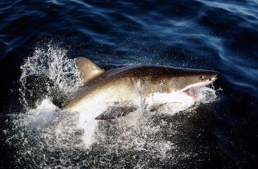 Polizeihubschrauber warnt Paddler vor Haien