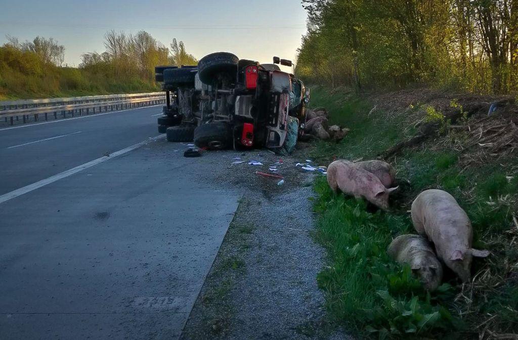 Der Transporter war mit rund 110 Schweinen beladen – 30 davon wurden getötet. Foto: Polizei