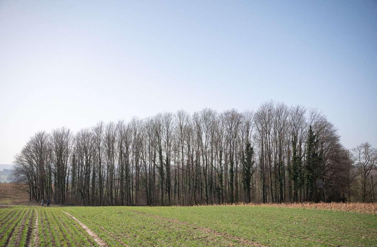 Der 14-jährige Tatverdächtige war am Mittwoch  in einem Waldstück bei  Sinsheim-Eschelbach  festgenommen worden. (Archivbild) Foto: dpa/Sebastian Gollnow