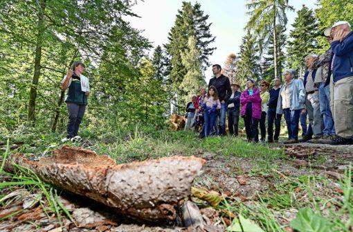 Der Stadtwald  wird zum Baumfriedhof