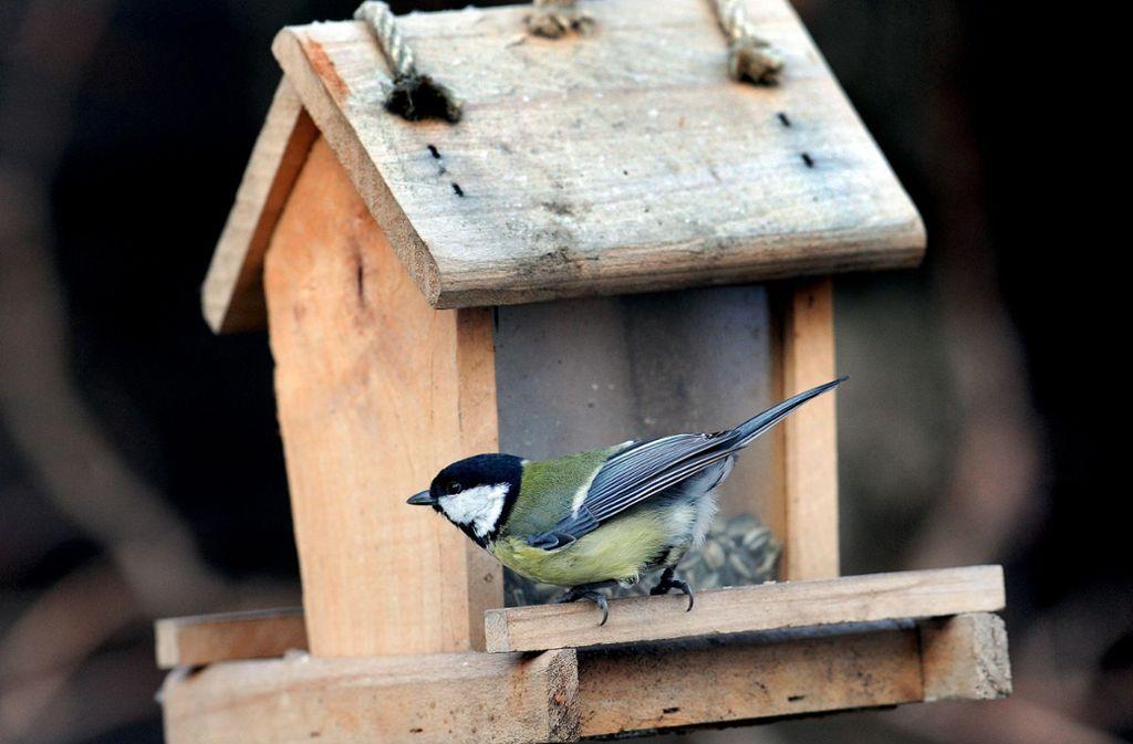 Von Vogelhäuschen zum Füttern von Haussperling, Kohlmeise, Feldsperling und Amsel ist der Nabu ohnehin nicht sonderlich begeistert. Foto: dpa/Holger Hollemann