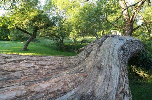 Sindelfingen will den Dronfieldpark aufwerten