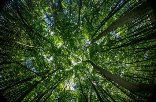 Können mehr Wälder den Klimawandel abschwächen?