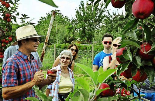 Obstbauer blickt mit Sorge auf Bienen-Volksbegehren