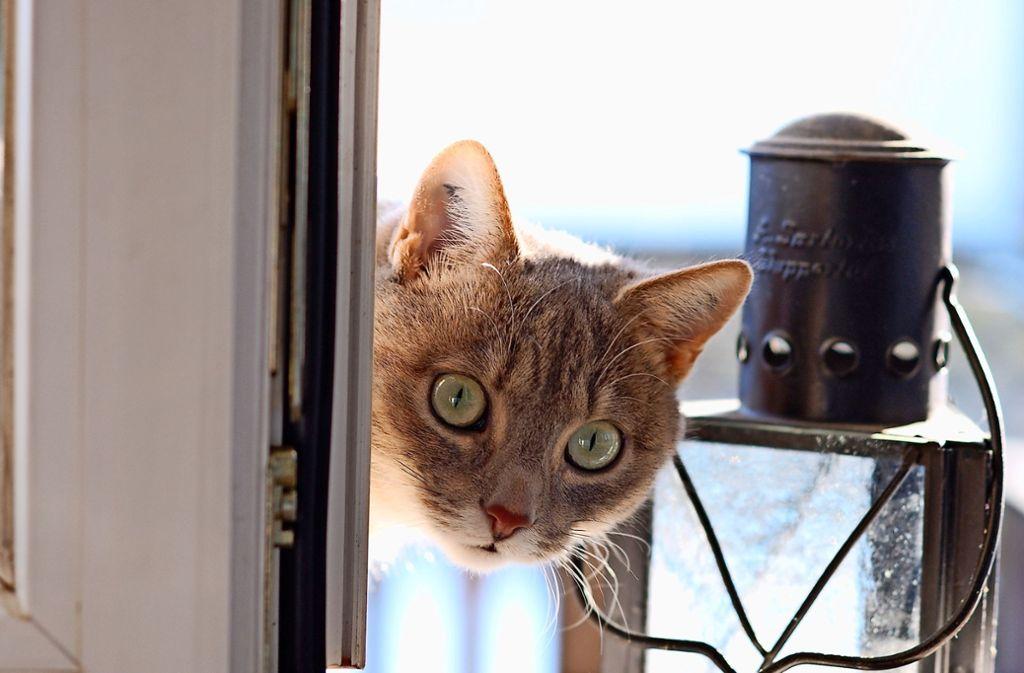Ein Porträt der  Katze Marzipan, nach der das neue Album benannt ist. Foto: privat