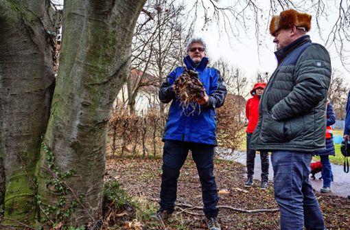 Pilze setzen Bäumen im Freibad schwer zu