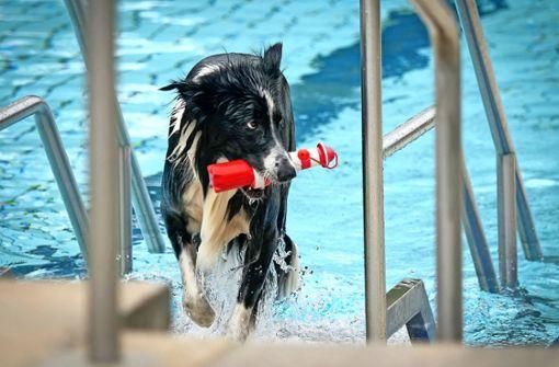 Hunde  dürfen  als letzte baden