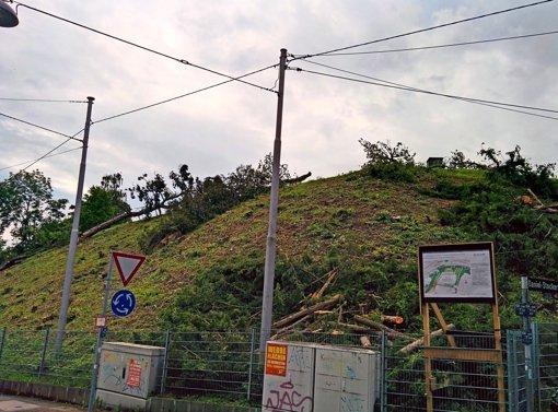 Auf dem grünen Hügel