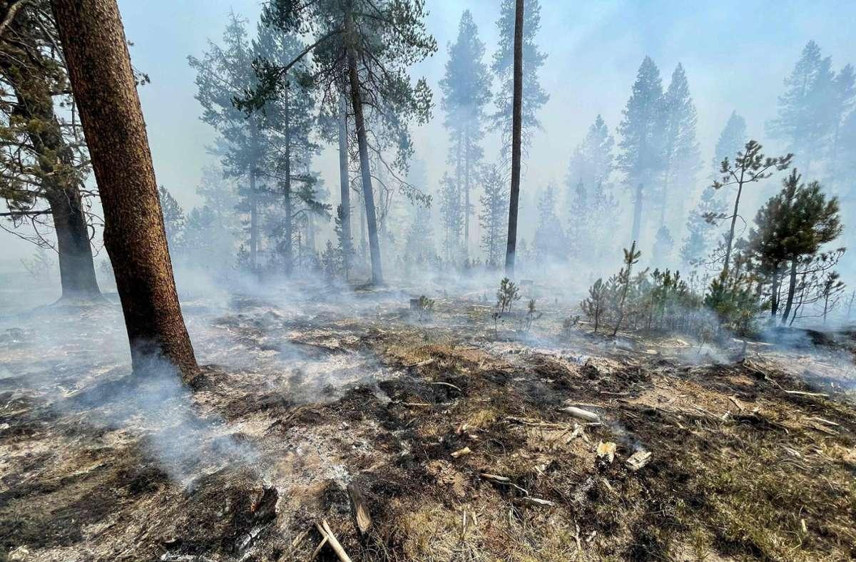Bislang hat das Bootleg-Feuer rund 117 000 Hektar verwüstet. Foto: AFP
