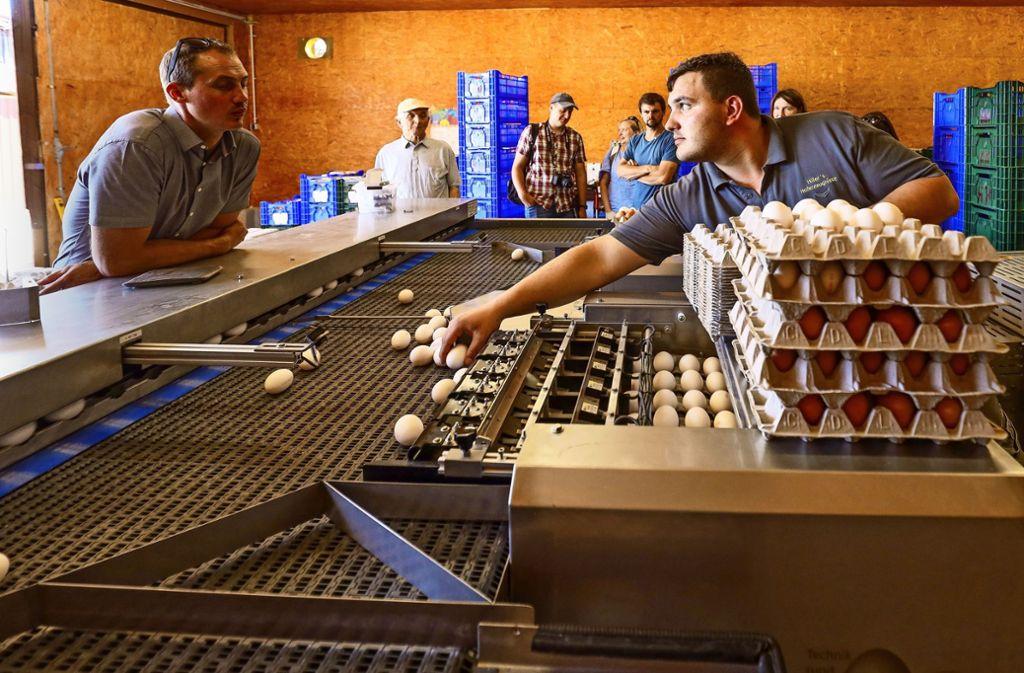 Mit der neuen Sortiermaschine kann der Landwirt Heinrich Hiller (rechts)  pro Stunde rund 12000 Eier durchleuchten, sortieren und verpacken. Foto: factum