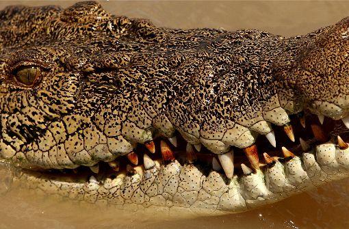 Mann von Krokodil getötet