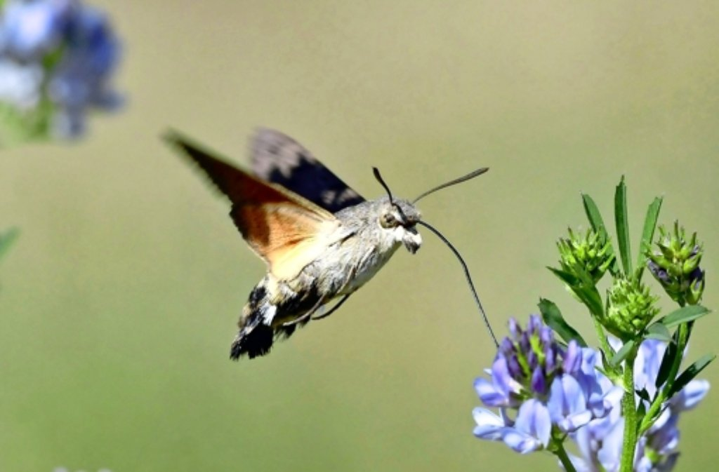 Wie Kolibris? Foto: Lechner