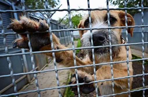 Steuernachlass für  Hunde aus dem  Tierheim?