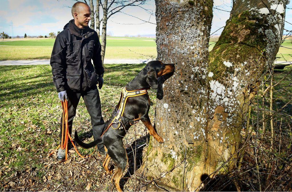 Aska und ihr Hundeführer Stephan Albrecht suchen den Käfer. Foto: factum/Simon Granville