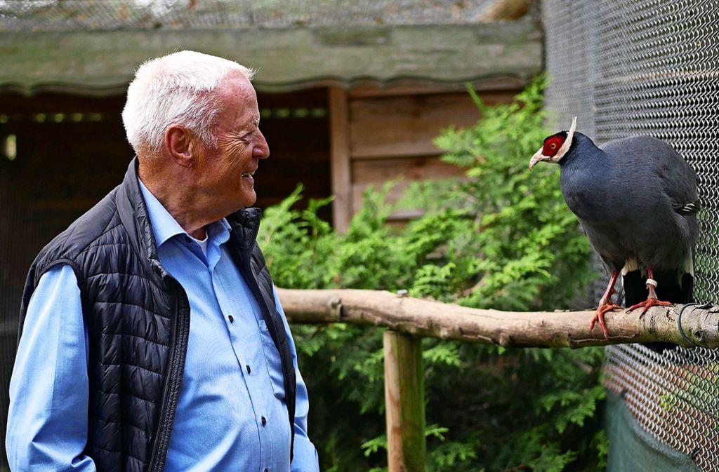 Normalerweise sind Fasane scheue Tiere. Doch der männliche Ohrfasan hat Vertrauen zu Fasanenmeister Klaus Lorenz gefasst und lässt ihn nah an sich heran. Foto: Eileen Breuer