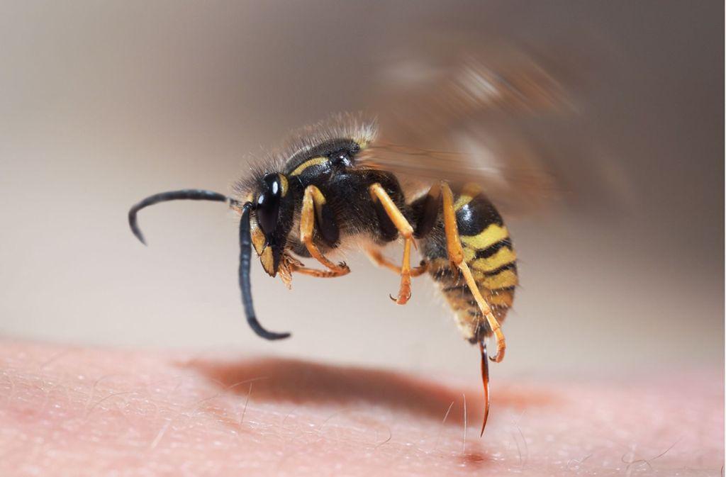 Ein Wespenstich hat in Oppenweiler zu einem Unfall geführt. (Symbolbild) Foto: Shutterstock/Irina Kozorog