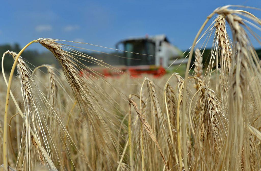 Wie die Ernte bei den Getreidebauern ausfallen wird, ist noch nicht sicher. Die Voraussetzungen sind nicht günstig: Der Winter war trocken. Foto: dpa