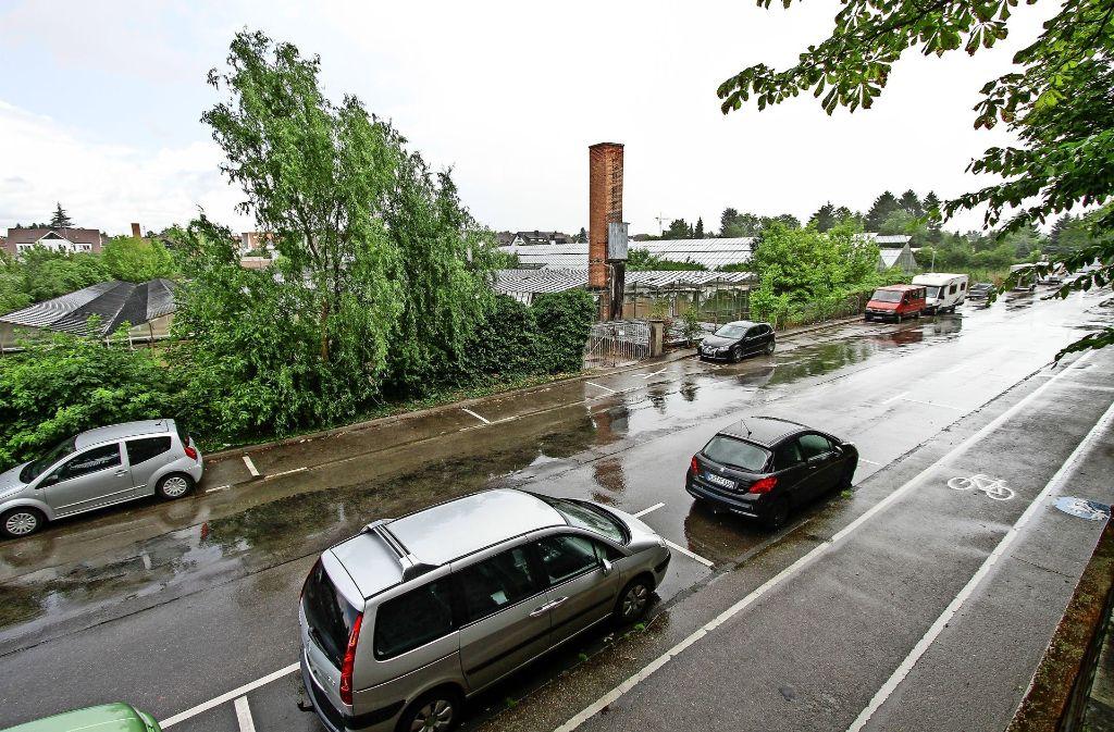 Das Gelände um das Stadionbad und die Fuchshofstraße soll völlig umstrukturiert werden. Die alten Gewächshäuser sollen Wohnhäusern weichen. Foto: factum/Archiv