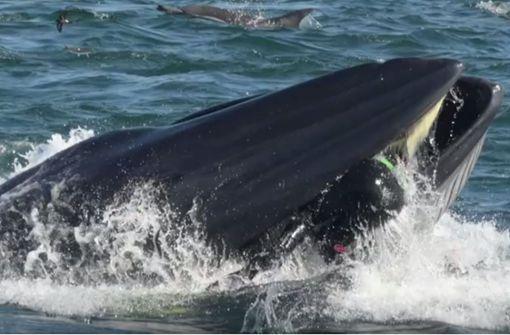 Wal schnappt deutschen Taucher und spuckt ihn wieder aus