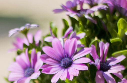 Blume für einen heißen Sommer