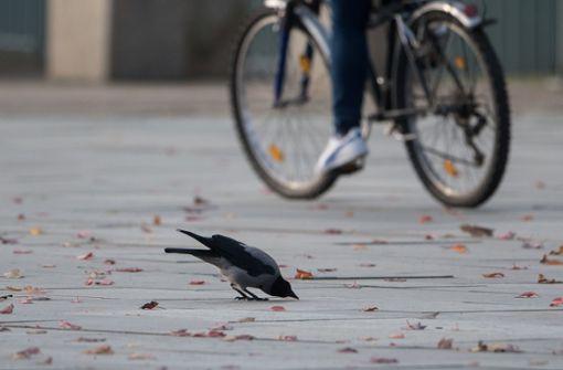 Radler und Fußgänger geraten aneinander