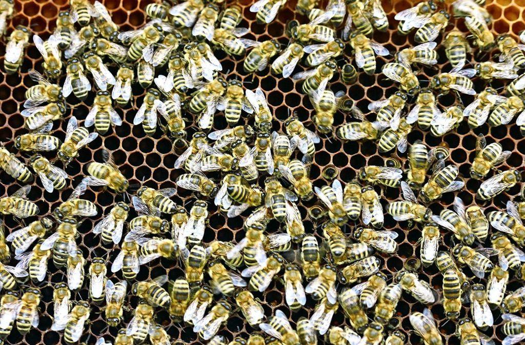 Auch in ländlichen Regionen soll das Bienenleben weiter gefördert werden Foto: pixabay