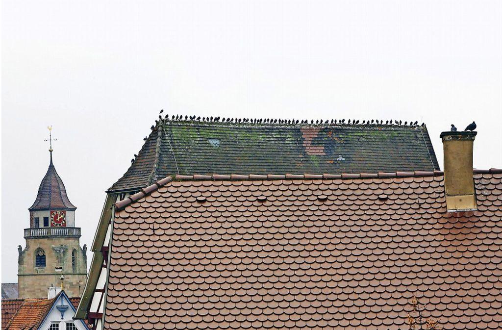 Das Dach des Schwarzen Adlers ist bei Tauben sehr beliebt. Foto: factum/Archiv