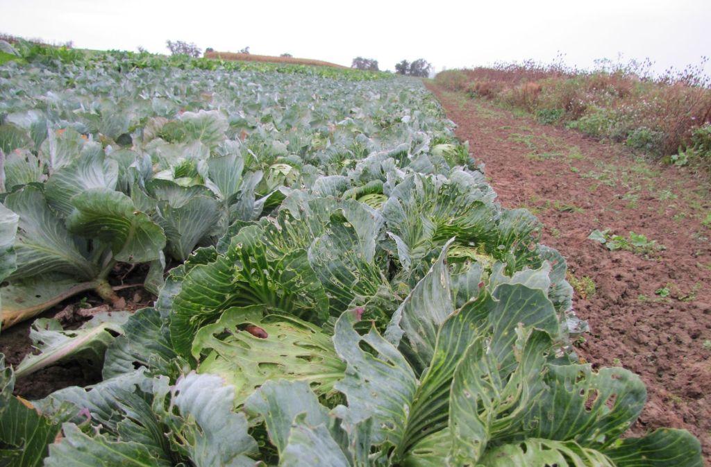 Landwirte aus Stuttgart-Plieningen würden besonders unter Flächenmangel leiden, sagt Michael Gehrung, Landwirtschaftlicher Obmann des Bezirks. Foto: