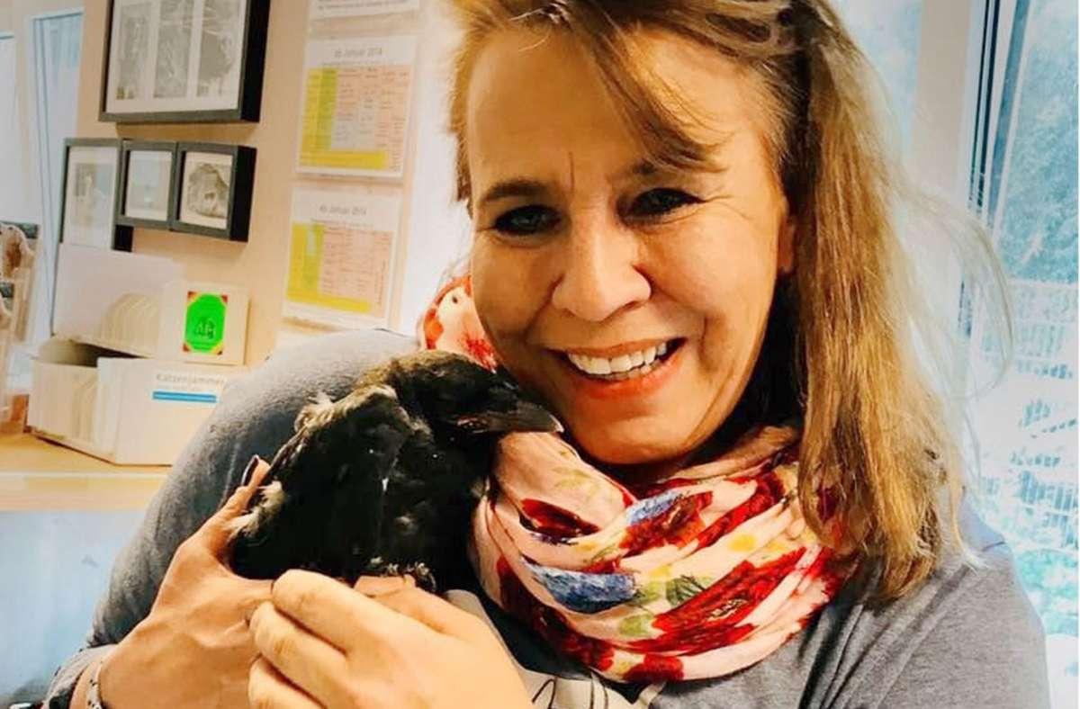 Ästlinge gehören nicht ins Tierheim: Tierheimsprecherin Petra Veiel mit der kleinen Rabenkrähe. Sie wurde kürzlich im Tierheim abgegeben, obwohl dies gar nicht nötig gewesen wäre. Foto: Tierheim