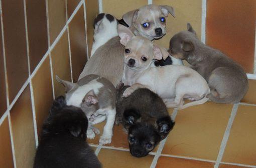 Dutzende Hunde- und Katzenbabys gerettet