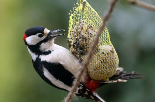 Ein Drittel aller Vögel in den USA sind verschwunden