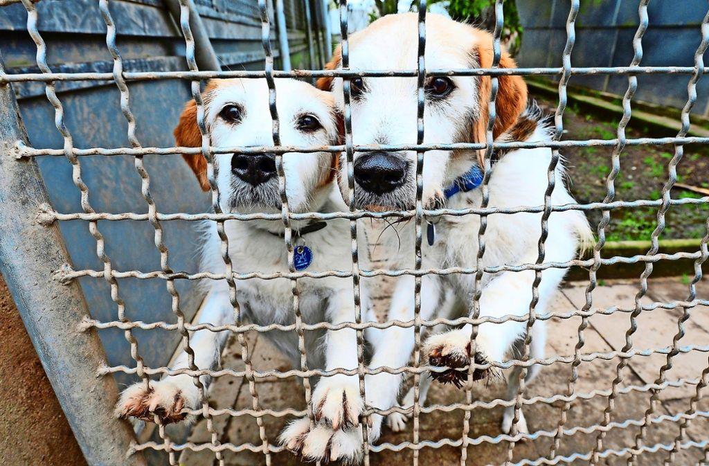 Bis zu 500 Hunde kommen jedes Jahr ins Tierheim nach Botnang. Foto: dpa