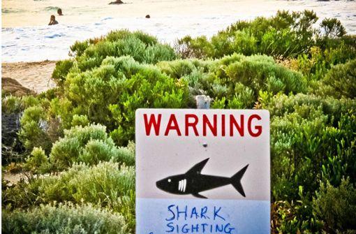 Bestie Hai – Mythos oder Wirklichkeit?