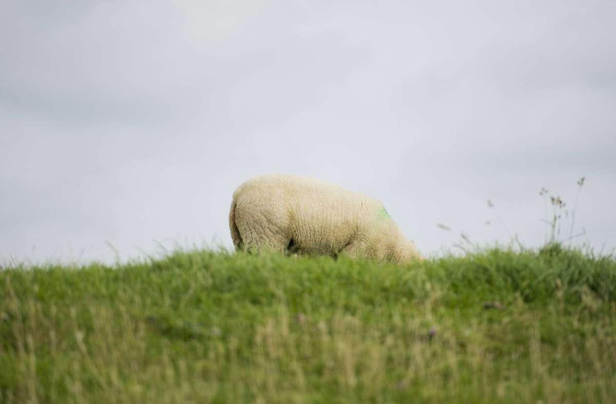 Irgendwann hatte das allergische Tier keinen Anzug mehr an (Symbolbild). Foto: imago/photothek/Michael Gottschalk
