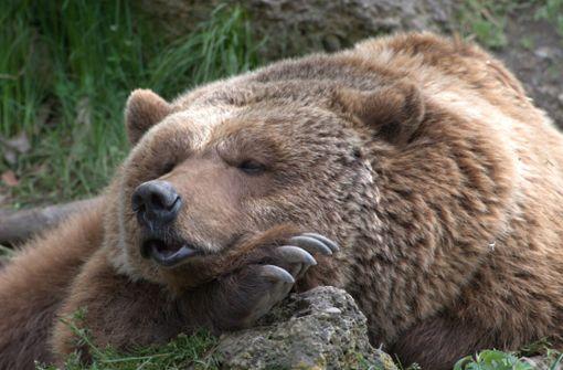 Bären machten Winterschlaf in Krankenhaus