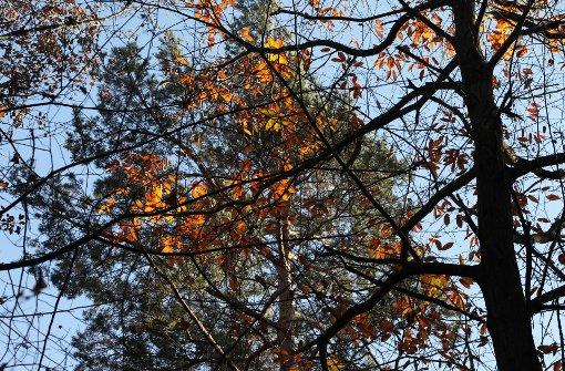 Warmes Klima sorgt für viel Totholz  auf dem Kappelberg
