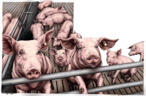 Bauernhoftiere sind Helden – und Opfer
