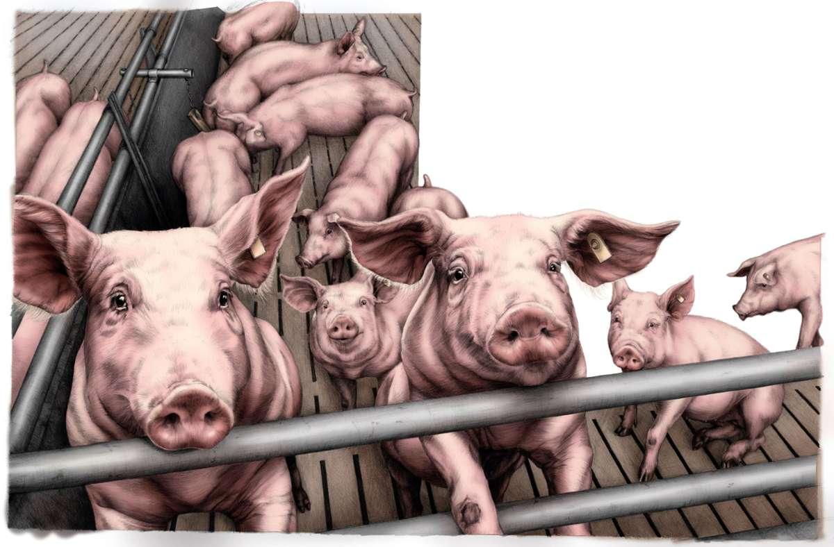 Wie sieht der Alltag von Bauernhoftieren aus? Kinderbuchautorin Lena Zeise hat sich auch im Schweinestall umgeschaut. Foto: /Klett-Kinderbuch/Lena Zeise