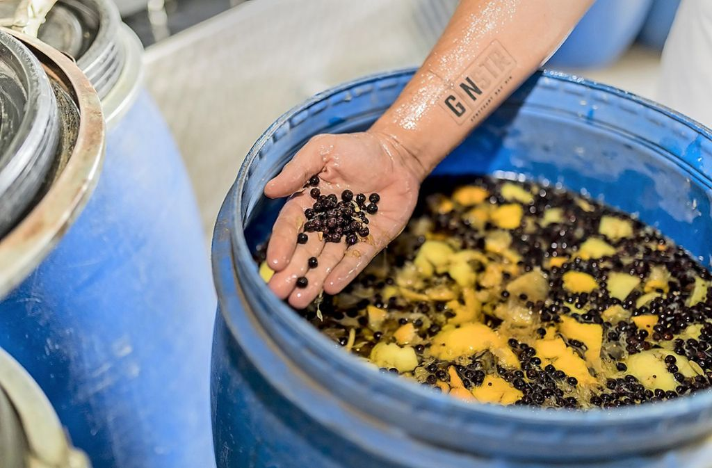 """Eine Hand greift in ein 120-Literfass mit Alkohol und Botanicals – es ist die Hand von Ginstr-Chef Alexander """"Sandy"""" Franke, der  das Logo seiner Marke auf den Unterarm tätowiert hat. Foto: Andreas Engelhard"""
