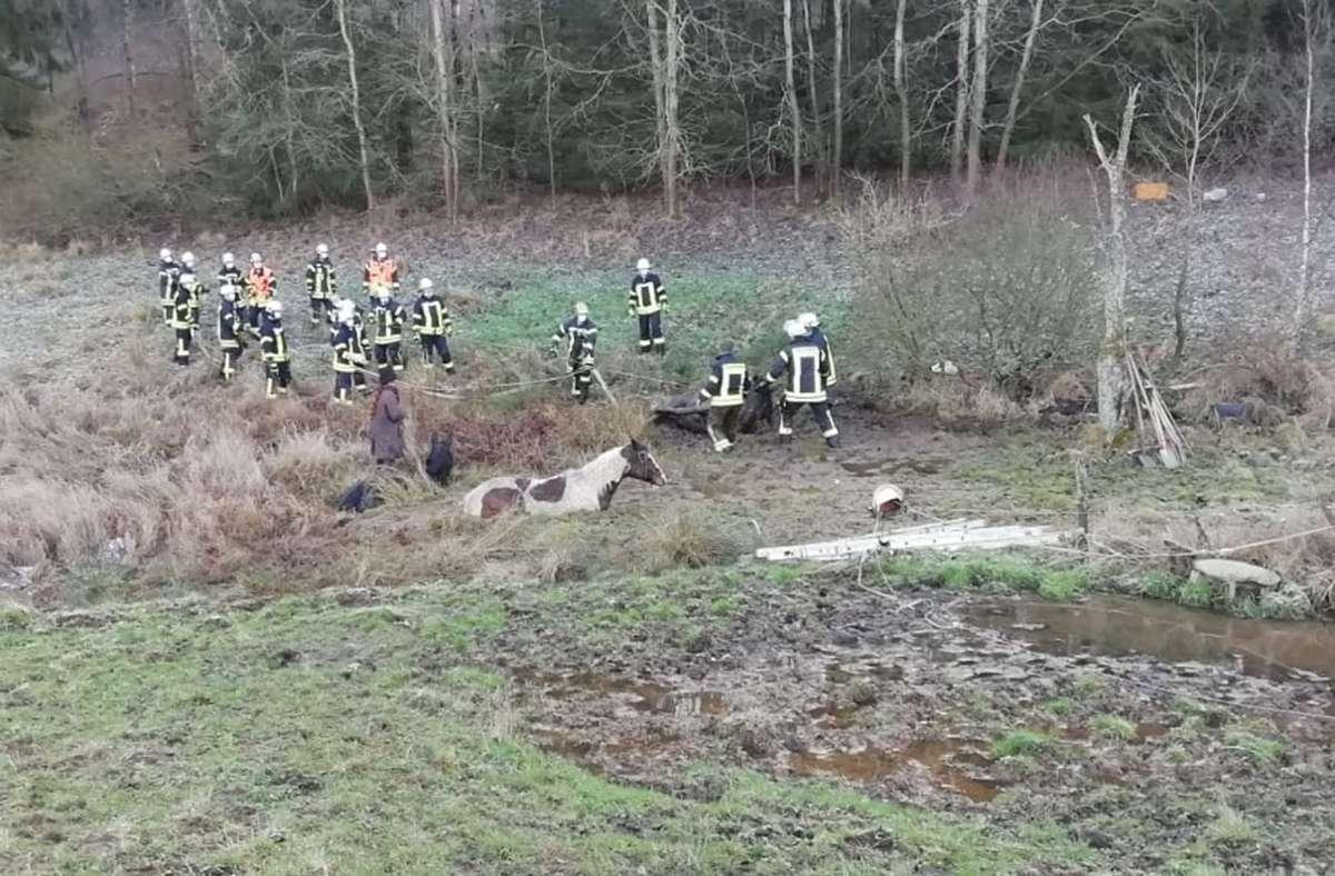 Die Pferde waren zuvor von einer Koppel ausgebrochen. Foto: Polizeipräsidium Osthessen