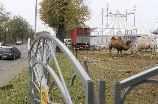 Zirkuskultur oder Tierschutz?