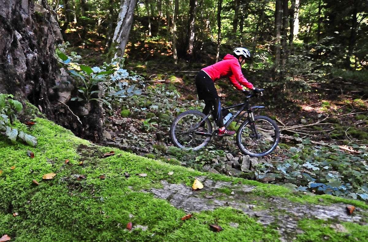 An der Planung des Streckennetzes durch den Naturpark Schönbuch, im Bild der Olgahain bei Bebenhausen, haben Mountainbiker mitgewirkt. Foto: z/Rainer Schmid