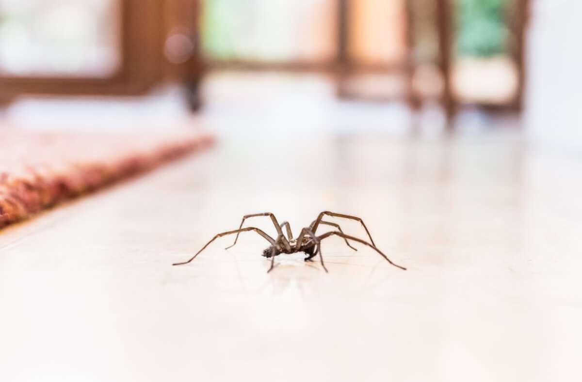 Unbeliebte Krabbler in den vier Wänden. Erfahren Sie 5 effektive Tipps, um Spinnen in der Wohnung zu vertreiben. Foto: Christine Bird / Shutterstock.com